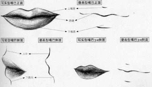 石膏嘴巴结构图