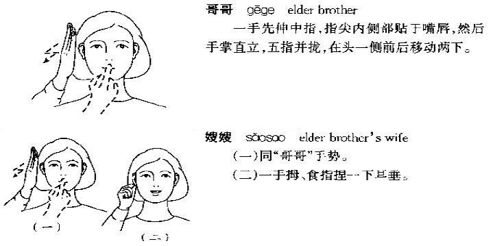 家人称谓171樱桃小丸子-雨不语-其他学习-沪江节目