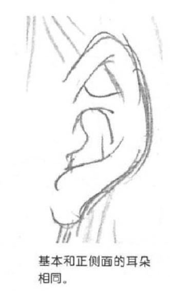 素描脸部的画法步骤图